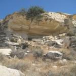 Σπήλιος της τριμιθκιάς