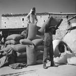 Αποθήκευση σπόρου κριθάρι (1974)